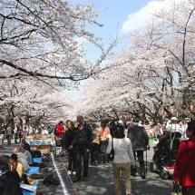 Ueno-Park-Winter-Photos